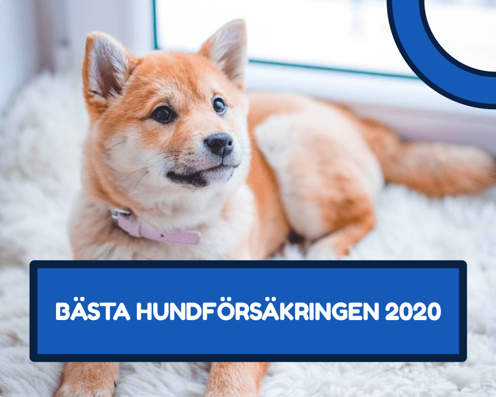 Bästa hundförsäkringen bäst i test 2020