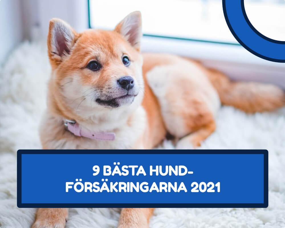 Hundförsäkring bäst i test 2021