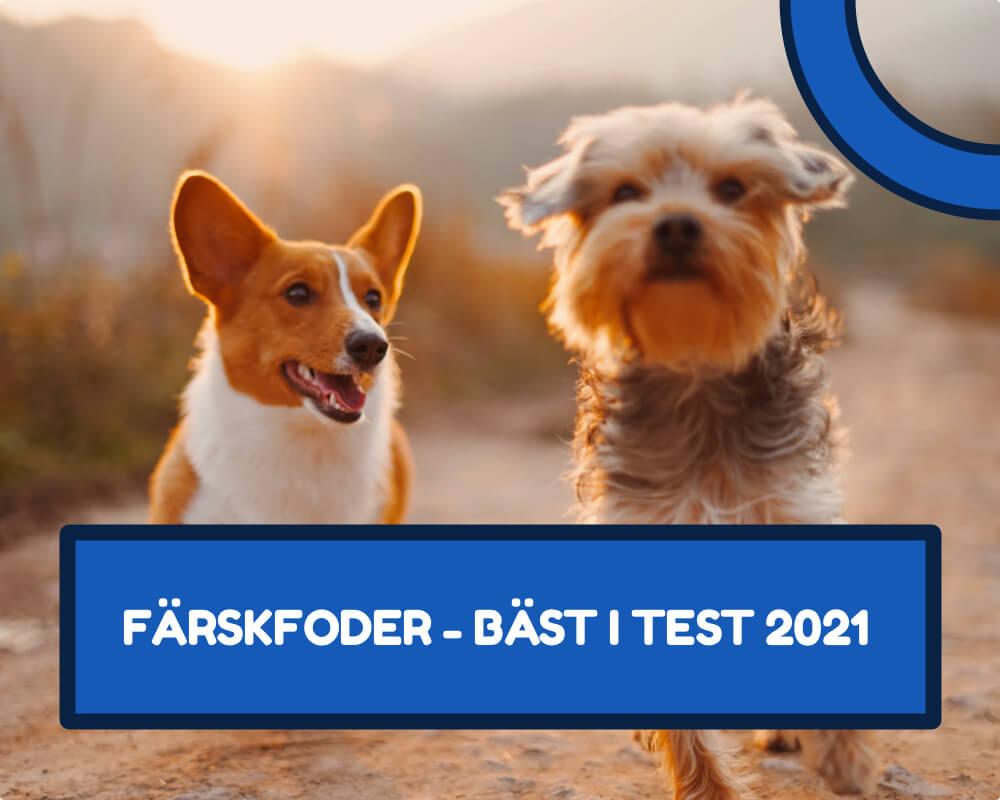 Färskfoder hund bäst i test 2021
